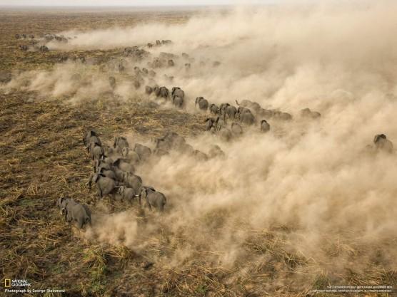 قطيع من الفيلة في جنوب السودان