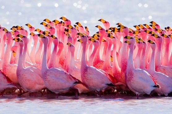 صورة خلابة للنعام الوردي الافريقي