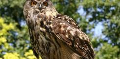 تصوير عالى الدقة لنسر ينقض على طعمة ليسجل اقوى لقطاط انقضاض الطيور في العالم