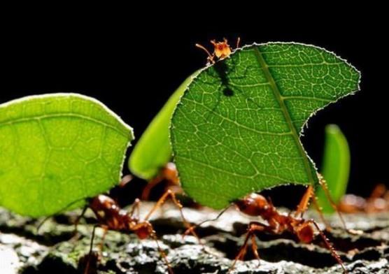التعاون والعمل والدفاع وتدبير شؤون الأسرة في مجتمع النمل