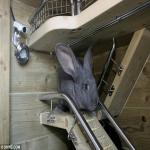 كوخ يزيد ثمنه عن 15 ألف دولار أمريكي يعيش فيه ارنبان !