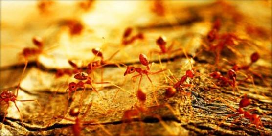 ابحاث بريطانية تقوم بتزويد نمل الغابات بأجهزة استقبال لاسلكية