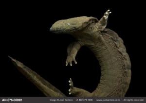 مشروع التنوع الحيوي هو محاولة لتصوير كل الحيوانات في العالم