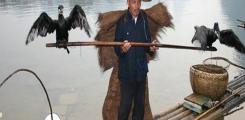 طرق غريبة للصيد في الصين واليابان صيد الاسماك بمساعدة طائر الغاق