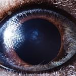 الابداع في التقاط صور جميلة لعيون الحيوانات عن قرب