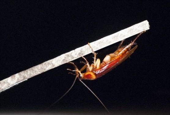 قدرة الصراصير الفائقة على الاختباء يكمن في ..