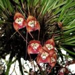 نوع جديد من الازهار يسمى الازهار الراقصة