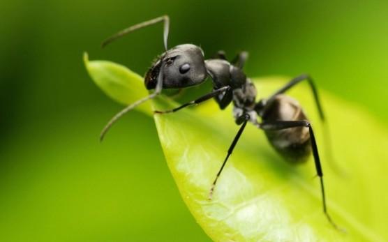 دومات يدخل فيها النمل حتى يصل الى الانهاك ويموت , ظاهرة عجيبة !