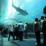 تعرف على اكبر حوض مائي في العالم