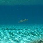 معلومات عن البحيرة الخضراء
