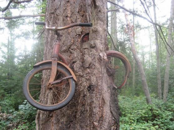 القصة الحقيقية للدراجة الهوائية في الشجرة